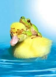 frogduck